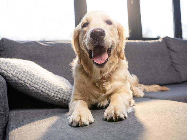 Perplexing pet protocols: what it means for landlords and tenants - REINSW
